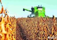 河南人為什麼不大規模種植大豆呢?