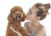 判斷泰迪犬是否把你當主人,就看它會不會做這5件事!