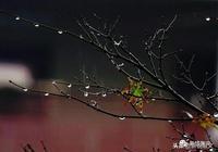 秋雨如綿,雨,把秋天誘騙來了