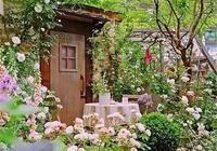 這些茶院子,約上三五好友靜坐閒聊,太美了!