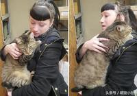 虎斑貓見有緣人飛撲,初見面就抱緊撒嬌:帶我回家嘛