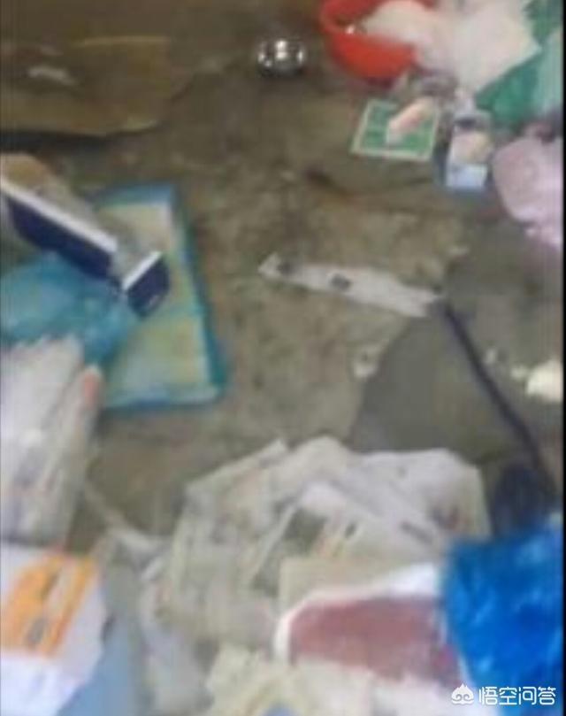 杭州義橋攔狗,結果造成50條狗死亡,愛狗人士是在愛狗的還是在害狗?