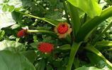 工廠的綠化長瘋了,種的植物我不知道叫什麼名字,大家分辨一下