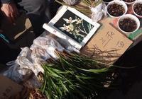西安灞橋週日集會上的花草萌寵