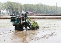 富農水稻專業合作社村民土地入股合作社帶富全村人