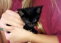 女子扛一盒子到收容所,39只小貓嚇到義工,這麼多我們救不了!