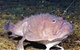 """世界上最醜的五種動物,其中有""""彭彭丁滿歷險記""""裡彭彭的原型!"""