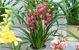 花卉圖集:大花蕙蘭