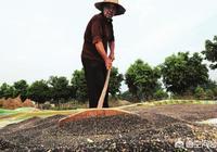 農村人種植的油菜籽,一般要晒多久才可以去榨油?