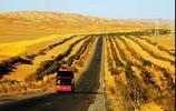 """文友新疆行旅實拍塔里木沙漠公路——""""死亡之海""""的綠色通道"""
