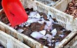 實拍青島海鮮一條街 品種琳琅滿目 大蝦梭子蟹 價格親民受歡迎