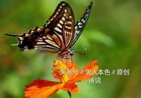 蝶戀花,飛舞張揚~花更香