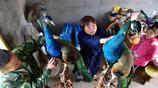 浙江農民夫妻中年搞創業,養殖孔雀一年掙20多萬,並帶動鄉親致富
