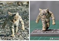 各種沙雕貓被一網友畫成插畫!也太可愛了吧
