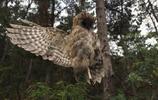 大連老鐵山保護區現捕鳥網 十餘國家二級保護鳥類死亡
