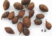 常用香料大全06——草果(草果仁)