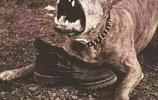 不說不知道,原來這些動物看著可愛,它們對人類來說也是致命的