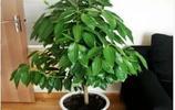 客廳擺放這幾種植物,財源滾滾來,賞心還吸甲醛