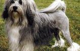 警惕、聰明、摯愛的羅秦犬,大家會不會喜歡呢?