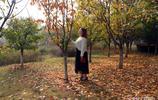 看楓葉賞美景,沙澧風景區紅楓廣場楓葉透紅,美美噠