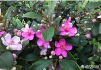 老家農村山上有很多的桃金娘,如何利用這些果實帶動村民致富?