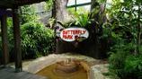 我的遊記圖集 賞玩新加坡蝴蝶公園與昆蟲王國 各異蝴蝶在空中飛舞