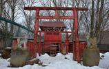 """實拍日本的狐狸村:沒有""""禁止餵食""""的標語,玩一次只需要700"""