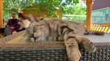 馬都督:我困了,我睡了,別喊我!到點自己能醒~ 