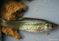 釣魚技巧:小雜魚多的魚塘,如何釣魚