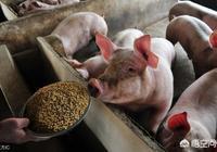 2019年下半年生豬價格能破10嗎?有哪些利好可以刺激豬價破10?