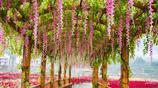 我的旅行日記 遊黃姚花海 在花花世界裡做一個幸福的花痴
