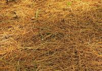 養花別再買花土了,教你自制營養土,疏鬆透氣不花錢,養啥旺啥!