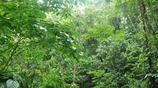 地理雜誌之高黎貢山國家自然保護區