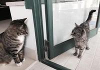一家不能藏二貓,看這兩隻貓咪的小眼神,能腦補一部80集宮鬥劇!