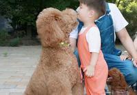 杜江家的駱駝是什麼狗,多少錢?