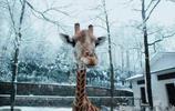 當動物愛上美顏相機,熊貓美顏後讓人忍不住笑了