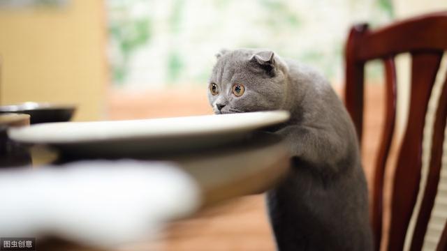將貓養好的關鍵是穩定二字,貓需要穩定的生活環境