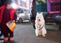 買狗到底是買幼犬好還是成犬好?看完解決了我多年的養狗疑惑!
