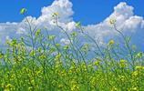 歡騰在草原 額爾古納河畔打滾大興安嶺腳下唱歌