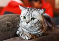 養貓後,我發現這五件事成為了不可能!看看你是不是也認同?