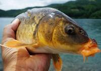 一套功夫過硬的鯉魚經驗,讓你能多守住幾條大魚!