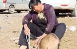 """農村大娘50元賣2年看家狗,死活不願離開,最後被屠夫""""揪""""上車"""