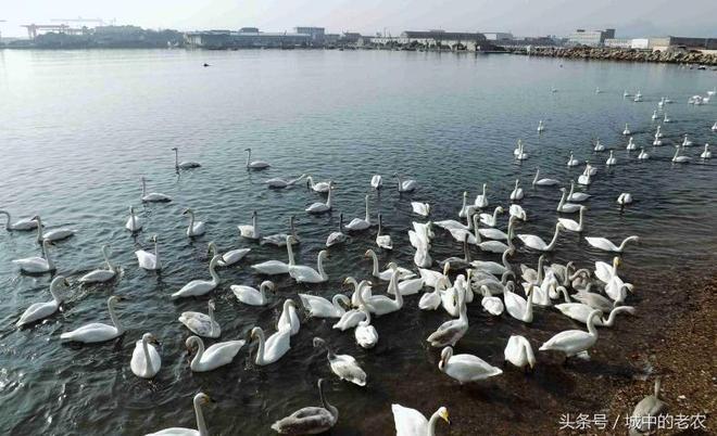 這裡有歷經百年的海草房、美麗的天鵝湖,每年吸引眾多遊客