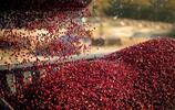 蔓越莓的季節