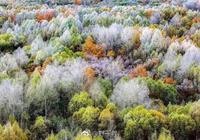 大興安嶺之秋,帶你走進一幅自然的畫卷
