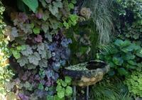 苔蘚植物在室內綠牆中的應用
