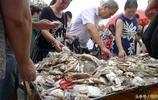青島人吃海鮮不差錢,趕早市買海貨回家喝啤酒魚蝦蟹應有盡有饞人