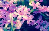 花主題壁紙丨一歲一枯榮
