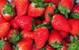 草莓大量上市,你真的會挑選嗎?辨別激素草莓,學會這幾招就夠了
