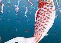 觀賞魚(錦鯉)簡介
